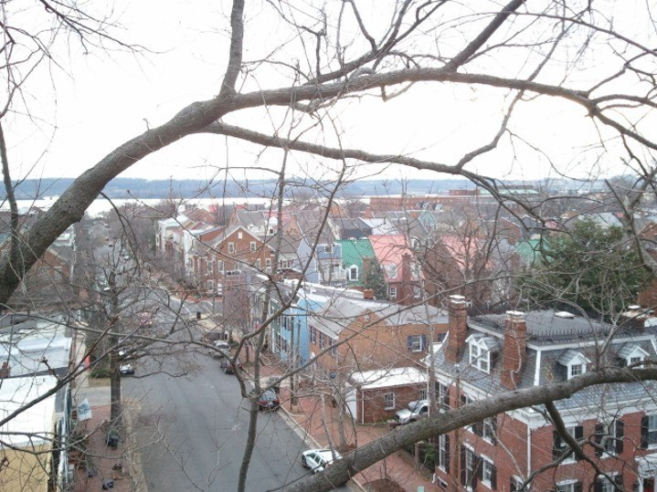 Picture taken from high up in a tree of Old Town Alexandria, VA