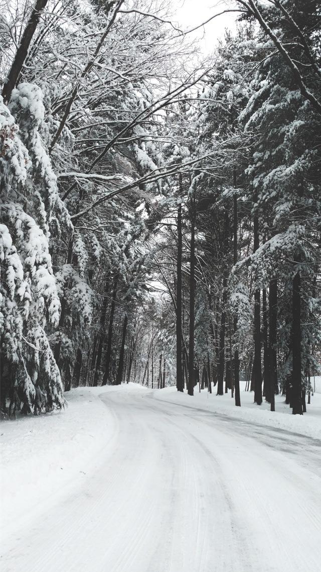 Trees Along A Snowy Road